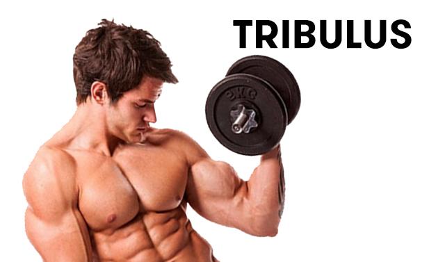 tribulus pilt