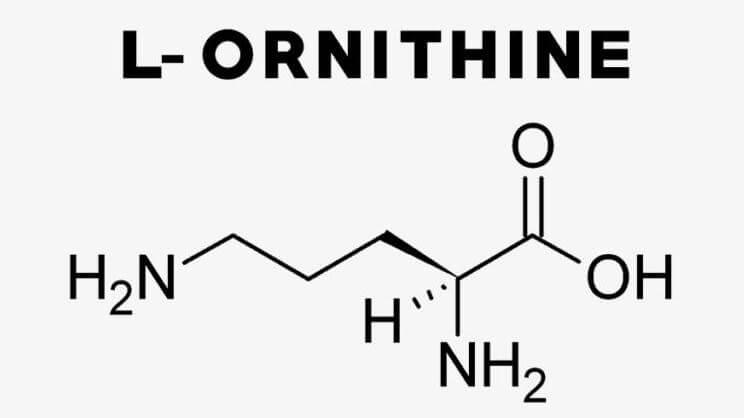 ornitiin pilt